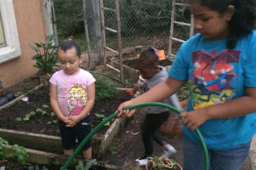 TC-Gardening